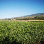 degustazioni vini etna